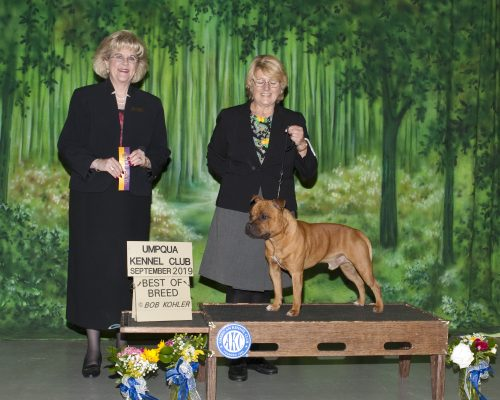 Tim Tim first Best of Breed win with his owner handler Ann