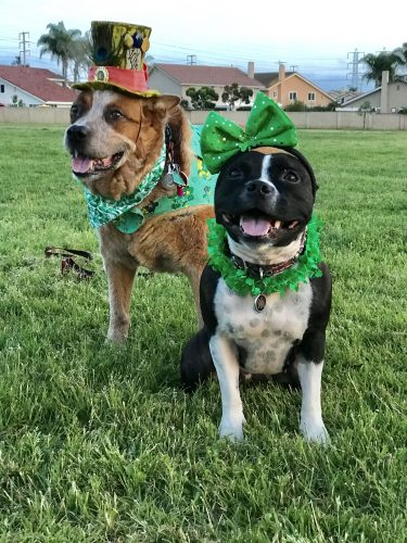 Sass and her best bud Chili dressing up for St Pattys