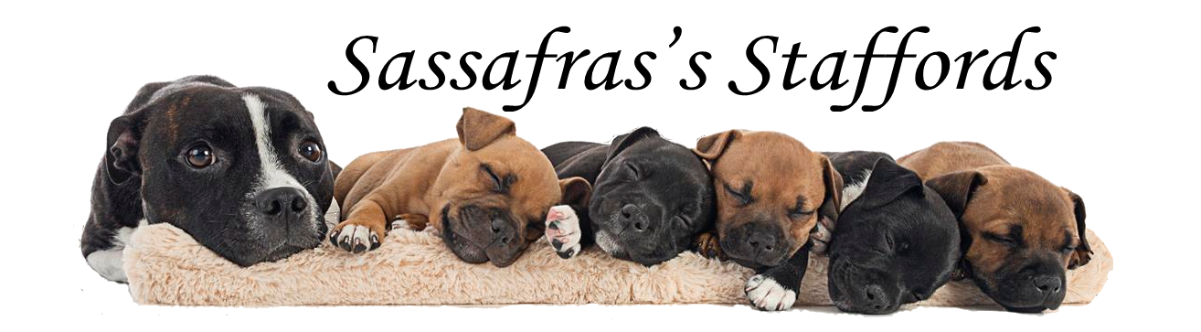 Sassafras's Staffords